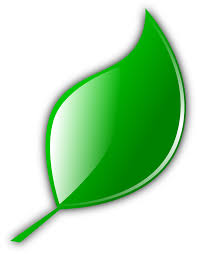 eco leaf leaves icon png 10670 free icons and png backgrounds