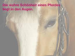 pferdesprüche die 100 schönsten pferdesprüche pferde und hunde
