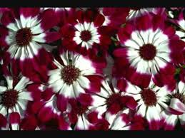 Pictures Of Beautiful Flowers In The World - the most beautiful flowers in the world youtube