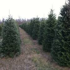 evergreen valley christmas tree farm christmas trees 71