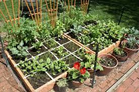 container vegetable garden ideas the gardens