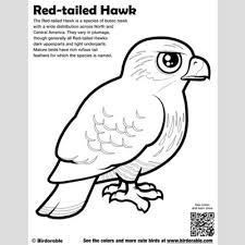 mature coloring pages cute bird coloring pages by birdorable free downloads