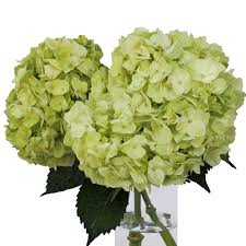 mint green flowers fresh green and crisp white flowers on sale fiftyflowers the