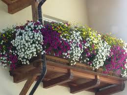 balkon blumen balkonblumen gärtnerei florian schenk