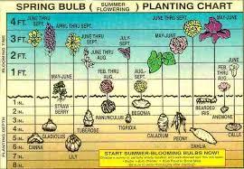 bulb garden design ideas pink springtime garden plan exhort me