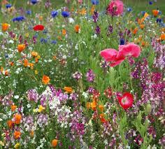 best 25 wild flower gardens ideas on pinterest wild flower
