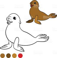 seal coloring page coloring page with colors brown little cute baby fur seal stock