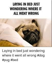 Dog In Bed Meme - laying in bed just wondering where it all went wrong laying in bed
