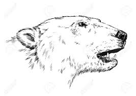 black and white engrave ink draw isolated vector polar bear