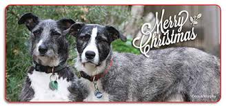 christmas cards victorian dog rescue