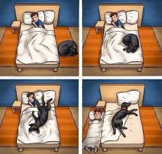 Dog In Bed Meme - sleeping with dogs in the bed