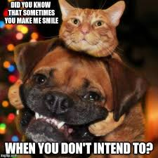 Frowning Dog Meme - turn that frown upside down imgflip