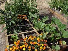 5 simple vegetable garden design ideas perfect for all seasons