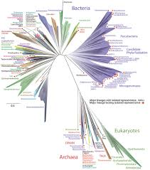 wealth of unsuspected microbes expands tree of berkeley