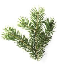 a christmas tree glossary martha stewart