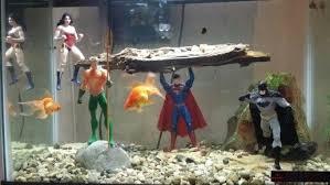 7 best ideas images on aquarium ideas fish