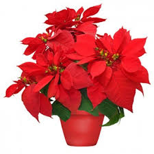 home for christmas centerpiece lulu u0027s flowers