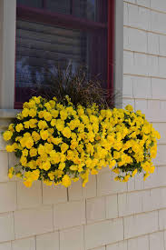 Winter Flowers For Garden by Winter Pansies Hgtv