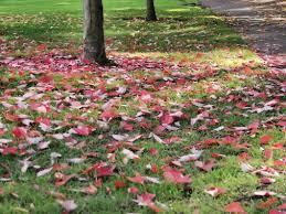 Landscaping Tyler Tx by Seasonal Landscape Maintenance Tyler Tx Weems Tree