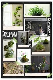 258 best kokedama images on pinterest plants flowers and gardening