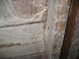 is white mold dangerous in my home nusite waterproofing contractors