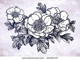 vector illustration beautiful peonies handmade prints stock vector