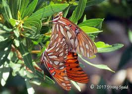 butterfly on a leaf before i forget