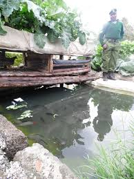 100 backyard fish farming tilapia before and after photos