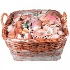 where to buy seashells shells buy seashells from the uk shells starfish