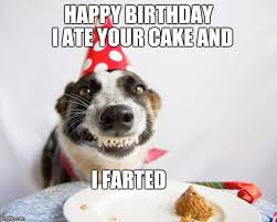 Birthday Dog Meme - birthday dog meme generator imgflip