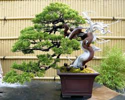 super regulated semi cascading juniper pretty much want this on