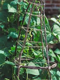 how to create a trellis in your garden hgtv