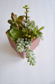 How To Make A Succulent Planter by Painted Succulent Planter My Uncommon Slice Of Suburbia