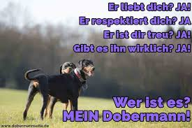 sprüche hund treue dobermann zitate und sprüche