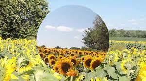 sunflowers grinters farm sept 2015 youtube