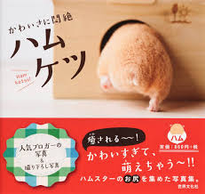 publishers cash in on hamster craze in japan nbc news