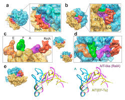 ijms free full text structural insights into trna dynamics on