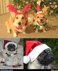 Christmas Dog Meme - christmas dogs meme generator captionator caption generator frabz