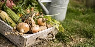 free garden plans kitchen garden design