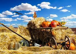 free photo thanksgiving autumn pumpkin free image on pixabay