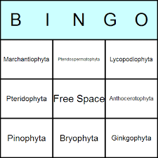 bingo card templates for printable games and activities