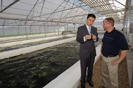 algae farming technology yields renewable fuel uses waste as