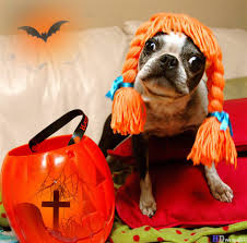 funny halloween backgrounds funny halloween pictures with animals 5 mr