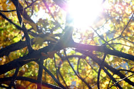 Learn More About Full Sun by Learn More About Full Sun In The Garden How To Use Full Sun