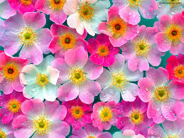 flowers wallpapers desktop group 93