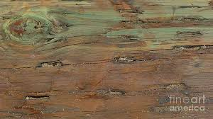 weathered wood weathered wood photograph by nora boghossian