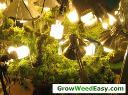 Plants Easy To Grow Indoors The Basics Tutorial Learn How To Grow Cannabis Indoors Grow