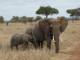 further reading african wildlife poaching u0026 safari tourism