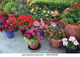 outdoor flower pots small garden patio stock photo 294499997