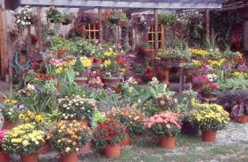 Container Gardening Ideas Container Gardening Ideas You Need To